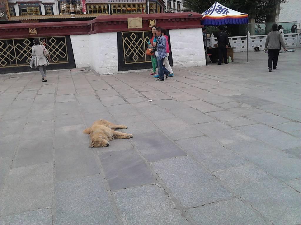 狗狗安详地在路上睡觉。