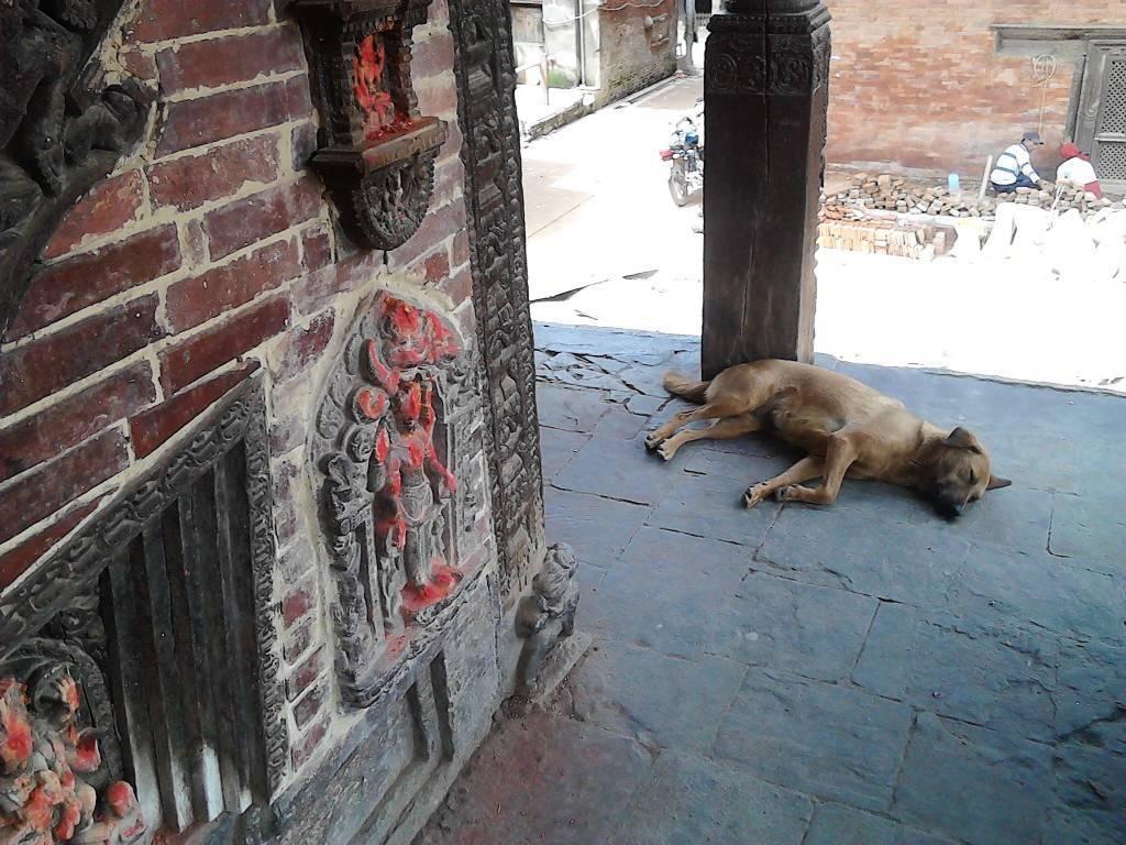 杜巴广场 睡觉的狗狗