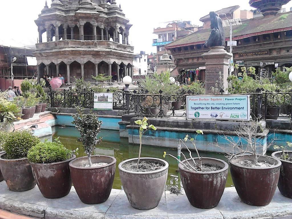 杜巴广场 绿化
