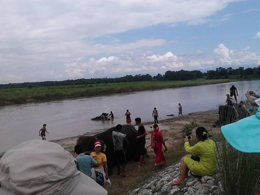 与大象戏水