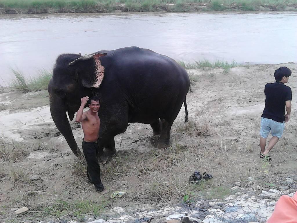 增值服务:与大象戏水