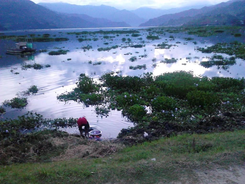 费瓦湖的污染