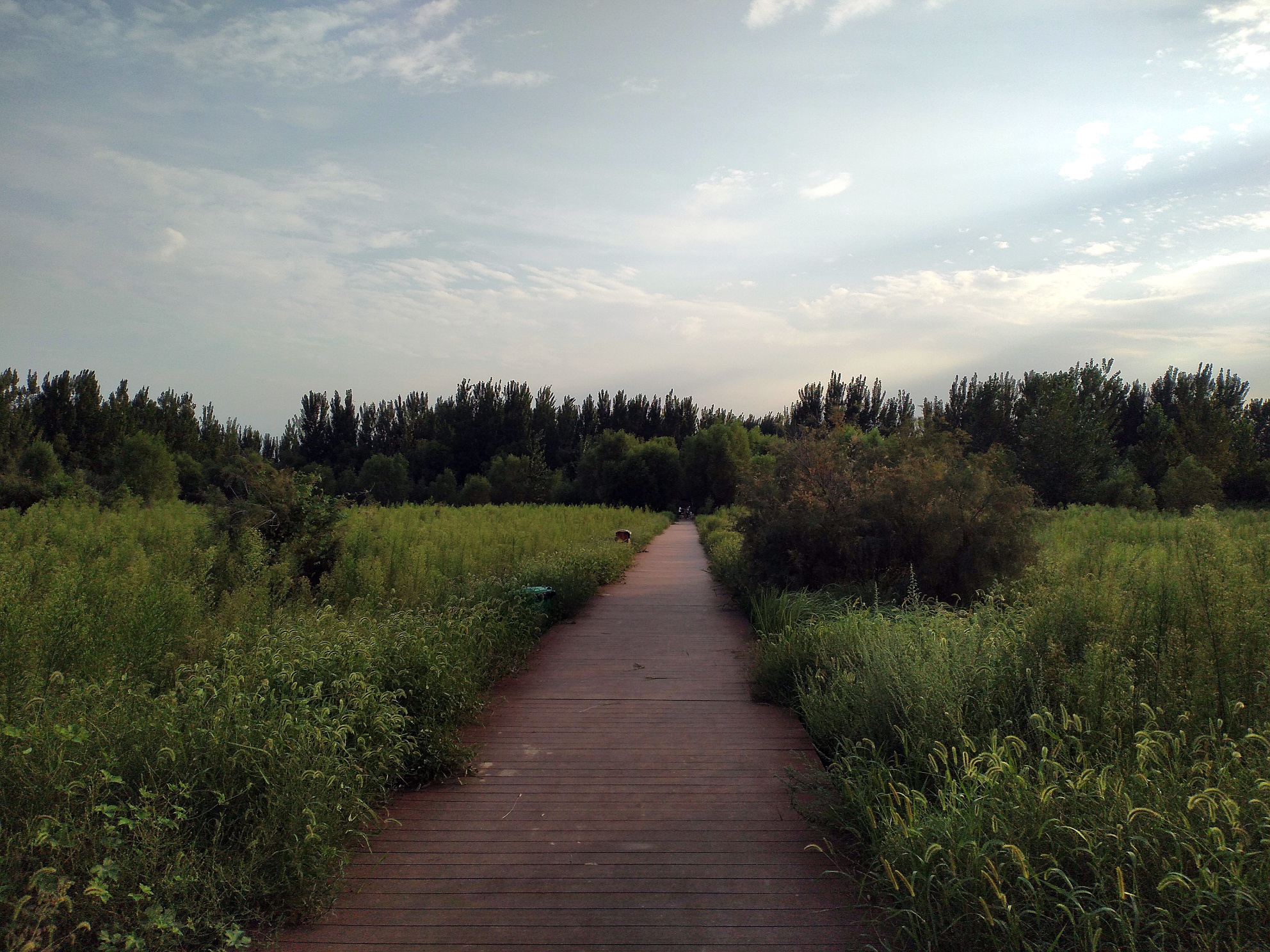 黄河湿地公园